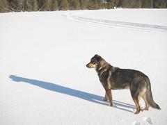 Long shadow (gnuf) Tags: shadow dog frozenlake