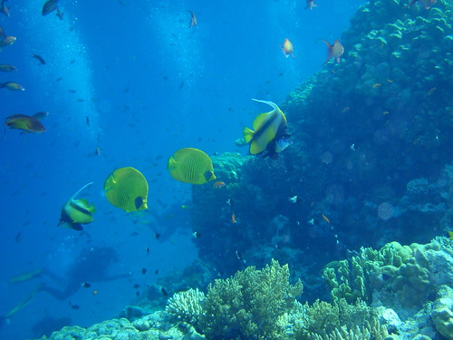 Scuba diving the colorful Red Sea