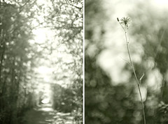 Dream - Part II (zane&inzane) Tags: life flower tree flora nikon soft bokeh f14 dream easy d3 28f14
