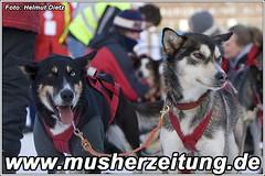 Eowyn & Mika - bernhard Schuchert - Leithunde