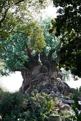 _MG_9237.jpg (Gregoryfo2) Tags: disney treeoflife