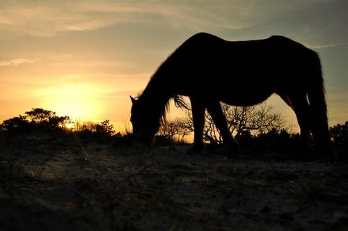 Wild Pony.