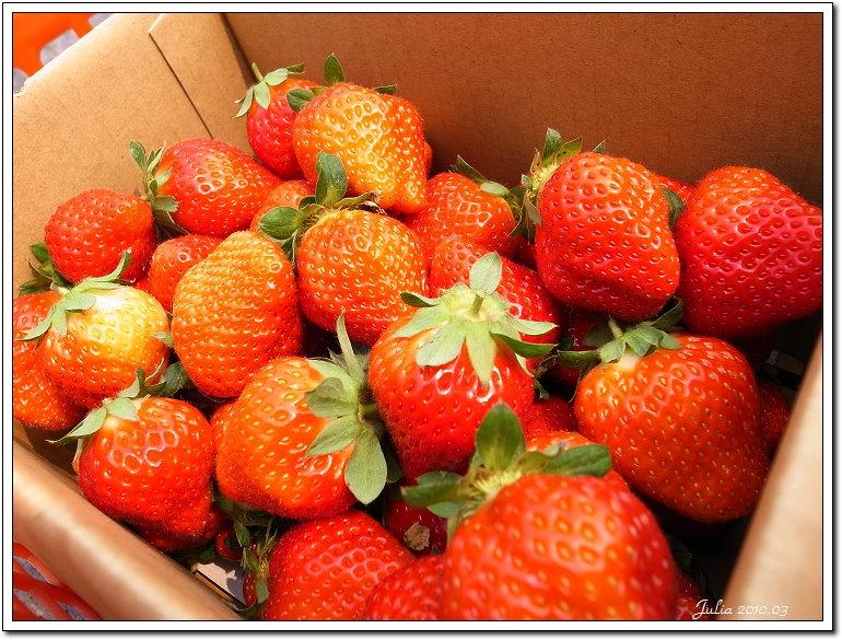採草莓 (4)