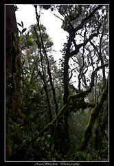 IMG_8476 (Dan Awestrike) Tags: photography malaysia cameronhighlands teaplantation