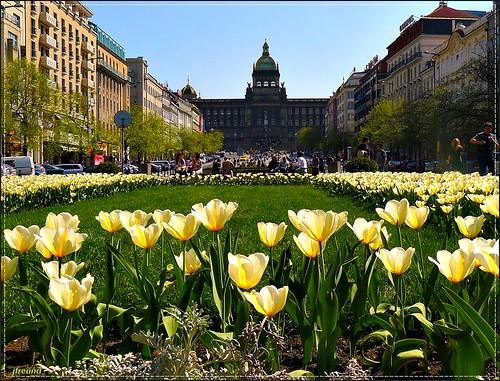 Spring on Wenceslas square, Prague