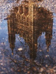 Palace in a puddle (Cosimo Matteini (PC virus ridden. Off for a while)) Tags: reflection london westminster puddle 50mm olympus parliamentsquare f18 zuiko houseofparliament palaceofwestminster epl1 cosimomatteini