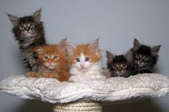 Katze_18 (Vivatier) Tags: cats cat katze katzen
