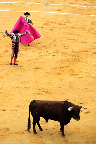 bullfight-fallas