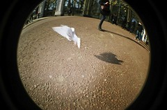40740034 (digthatbird) Tags: london lomo lomography fisheye
