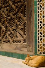 Cat, Bou Inania (QXZ) Tags: africa travel sleeping cat tile islam morocco fez maghreb medina carvedwood fs medersa zellij fselbali zellige