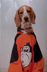 296/365 Ice Monkey (Paguma / Darren) Tags: dog hound floyd tamronspaf1750mmf28xrdiiildasphericalif
