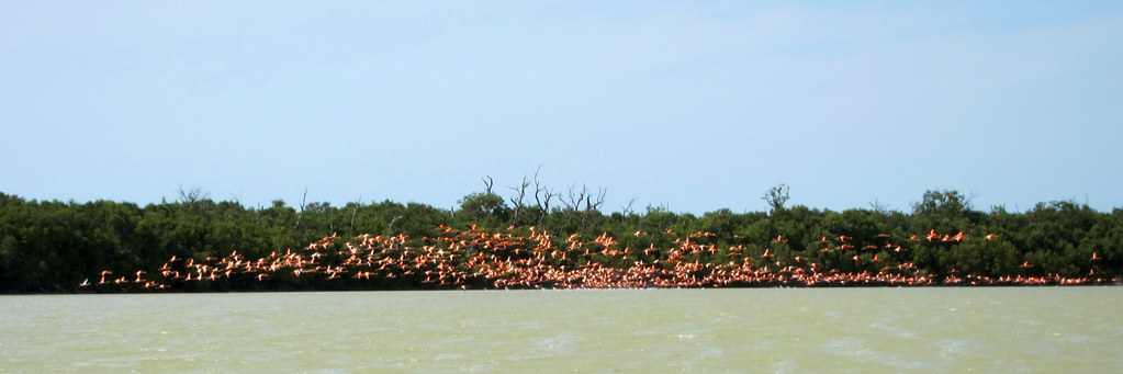 IMG_0464: The Pink Flamingos