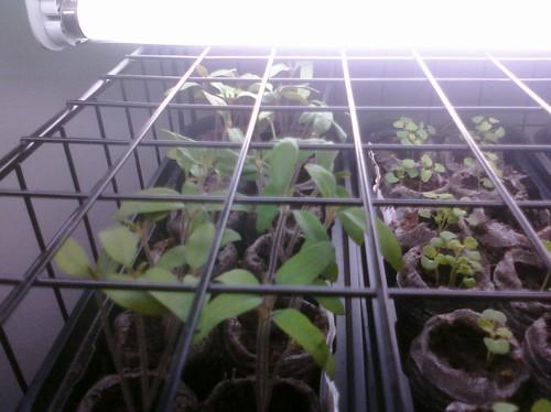 Greenhouse 4-2-10