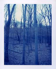 Polaroid 64 002 (Reid Haithcock) Tags: trees color film boston landscape polaroid 4x5 tungsten jamaicaplain largeformat arnoldarboretum instantfilm polaroid59 fujifp100c45 bummercity reidhaithcock polaroid64