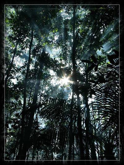 esprit,forêt,amazonie,Yanomami