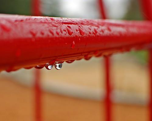 7/365 - More Spring Rain