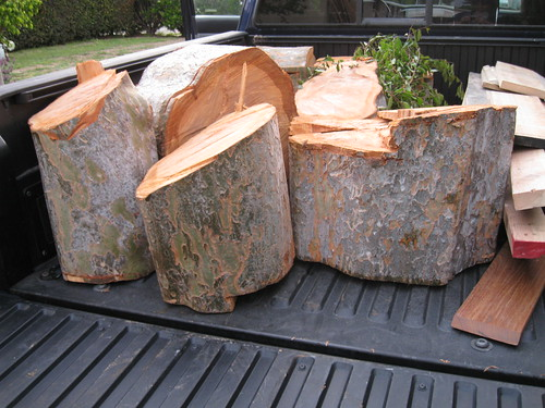 Found Wood 18 Chinese Elm Finally By Gary Fixler At Lumberjocks