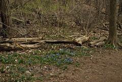 Trail Flowers