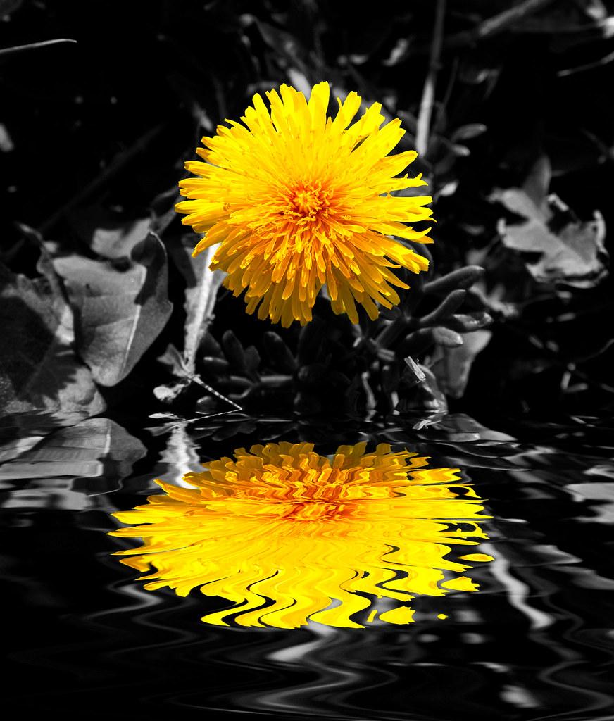 IMAGE: http://farm5.static.flickr.com/4041/4502190339_f6f6c7a5ee_b.jpg