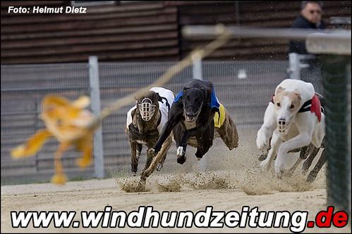 Greyhounds-Kurve eins: SIE KOMMEN!