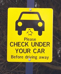 Check under your car