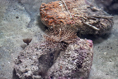 This is no Pandora (Materloo) Tags: barbados seaanemone animalflowercave