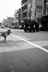 watch (Danny Chou) Tags: street bw dog film photography kodak watch 9 11 contax mins t2  tx400 sheepdol