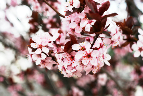 pink petals pink leaves