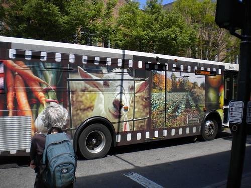 On the streets of Ashvegas: Bus art