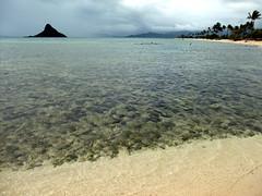 Kualoa Regional Park @ Kaneohe, Oahu ((^_~) [MARK'N MARKUS] (~_^)) Tags: hawaii oahu kaneohe kualoa 5photosaday kualoaregionalpark fv1 hnlapr10 hnlapr10mos 2010digest