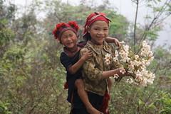 Nhng em b trn no ng ti (Tran_Thaohien) Tags: people mountain landscape high vietnam ethnic sapa vitnam phongcnh conngi cnhpsapa