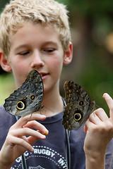 baudchon-baluchon-mindo-papillons-29