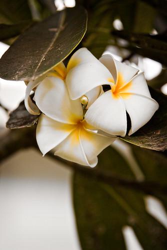 gardeniaproof