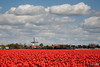 Typical Dutch! (BraCom (Bram)) Tags: sky orange mill netherlands windmill dutch clouds spring tulips bloom goereeoverflakkee abigfave bracom bramvanbroekhoven