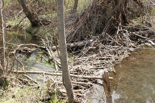Beaver Dam - Umtanum Falls Trail