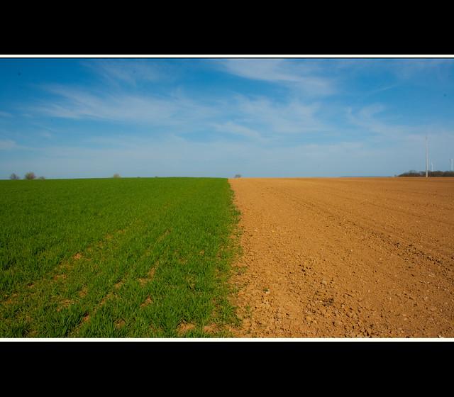 Fields.....