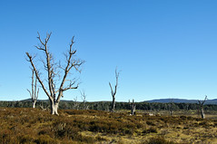 Tree & Sky - Cradle Mountain Rd Photo
