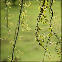 rebirth (ljkay) Tags: texture spring 1485mm d700