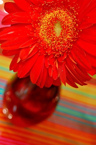Daisy in vase on stripes