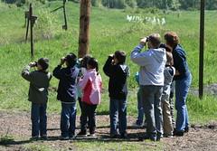 Young Bird Watchers