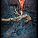 Knox Gorge Log