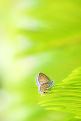 Lovely minimalist (-clicking-) Tags: macro green nature beautiful butterfly nice dof natural bokeh insects fresh lovely minimalism simple pure minimalist simplest colorphotoaward thechallengefactory blinkagain blinkagainfrontpage bestofblinkwinners artistoftheyearlevel3 artistoftheyearlevel4 artistoftheyearlevel5 artistoftheyearlevel7 artistoftheyearlevel6 highqualityanimals