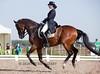IMG_5710 (White Bear) Tags: horses horse animals russia contest russian equestrian equine artem dressage лошадь фестиваль артем конь кони новый i лошади спорт makeev приз кск век соревнования этап макеев конный выездка