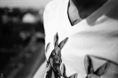 . (romanraetzke) Tags: roof portrait bw man male bunny film shirt analog 35mm hair blackwhite nikon chest hamburg tshirt portrt apx100 sw mann agfa dach hase tier 2010 haare druck f801s brust schwarzweis kleinbild