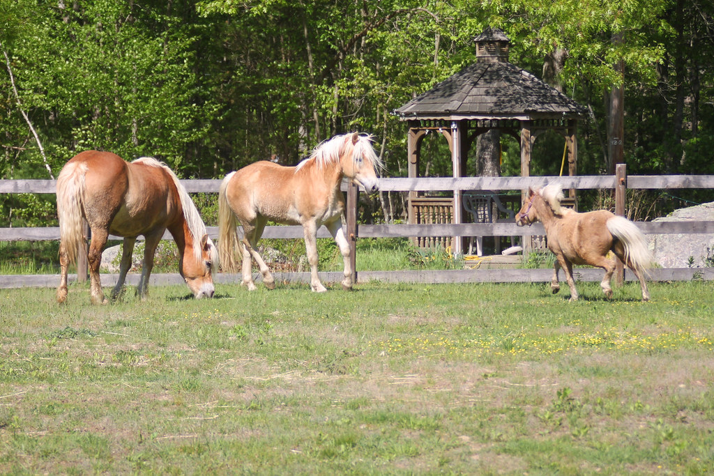horses 215x