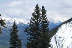 Banff Gondola (Marcanadian) Tags: park mountain mountains car observation point town spring view rocky cable national alberta banff gondola sulphur cascade
