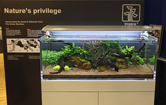 graeme (George Farmer) Tags: plants fish water aquarium aquascape tropica aquascaping tgm georgefarmer ukaps interzoo