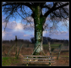 850 Morvan Dream (Nebojsa Mladjenovic) Tags: light sky mist france tree nature digital rural landscape outdoors lumix burgundy hiver panasonic bourgogne campagne arbre priroda morvan fz50 drvo yonne svetlost mladjenovic mygearandmepremium