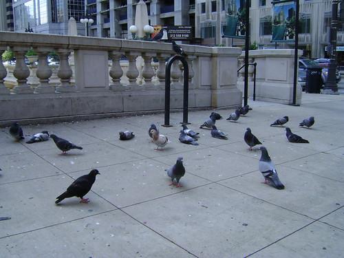 DT birds