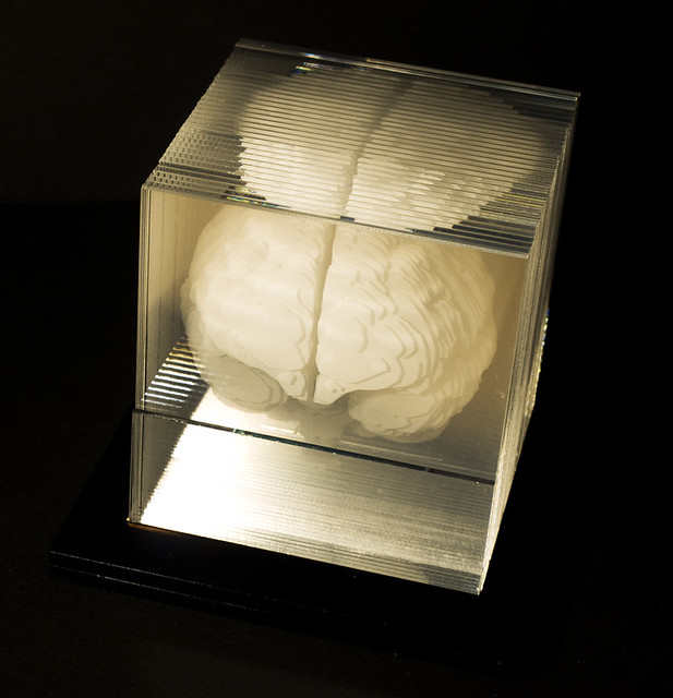 model of a brain created via sections lasercut from acrylic by Dwight Song